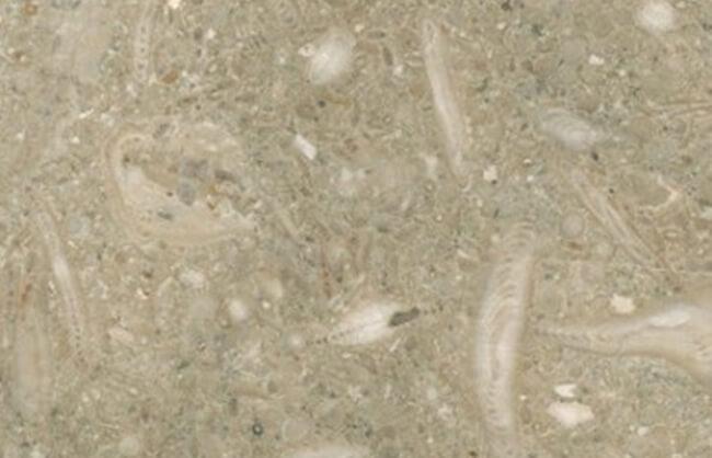 Limestone Fossil