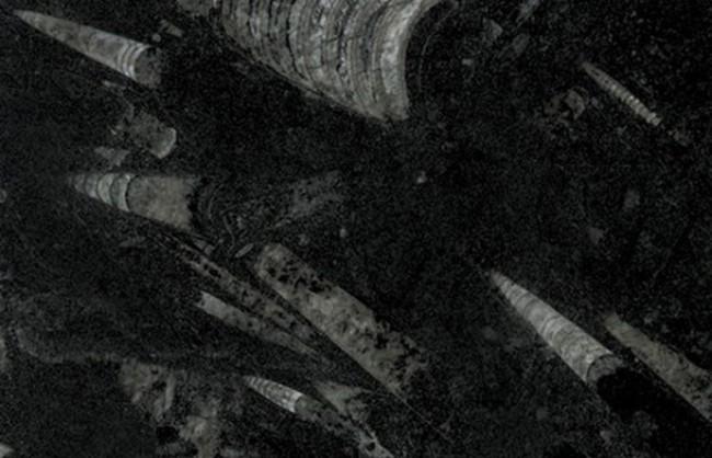 Mármore Fossil Black